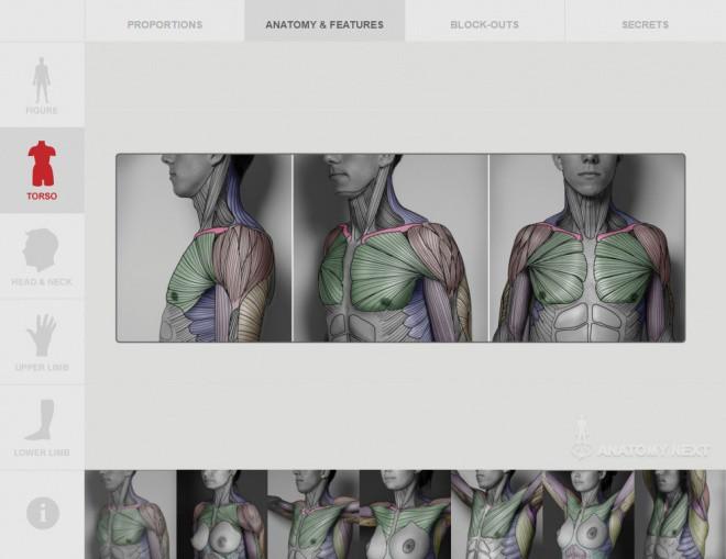 Anatomy Next 1