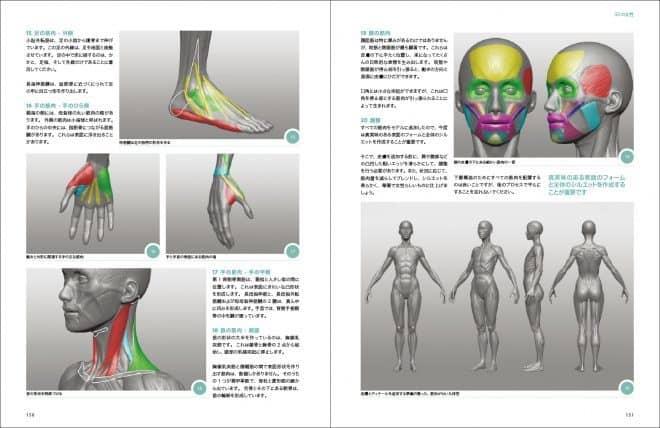 3d_anatomy_03