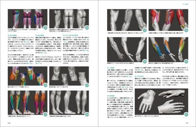 3d_anatomy_04